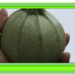 チクチクっと産毛を感じる野菜達の自衛機能